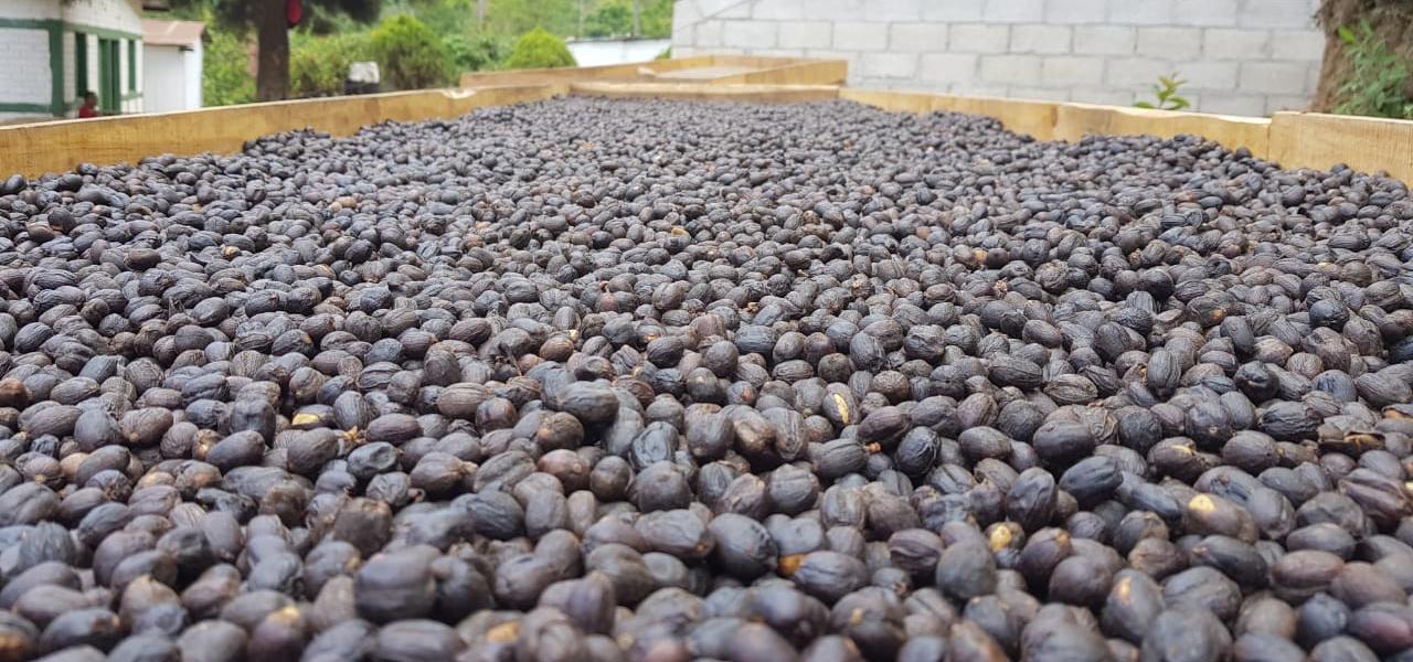 El Salvador Kaffeekirschen natural aufbereitung