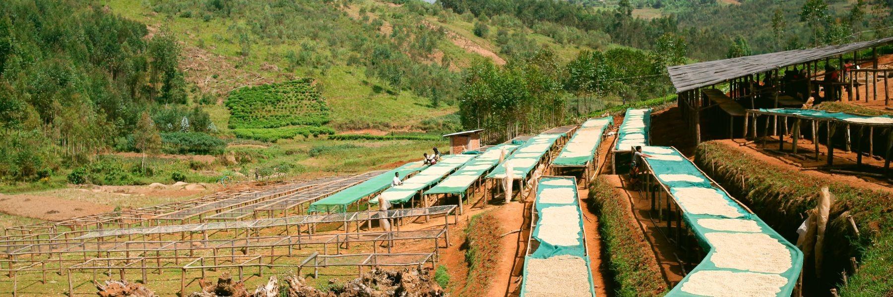 Burundi Kaffee Washings Station