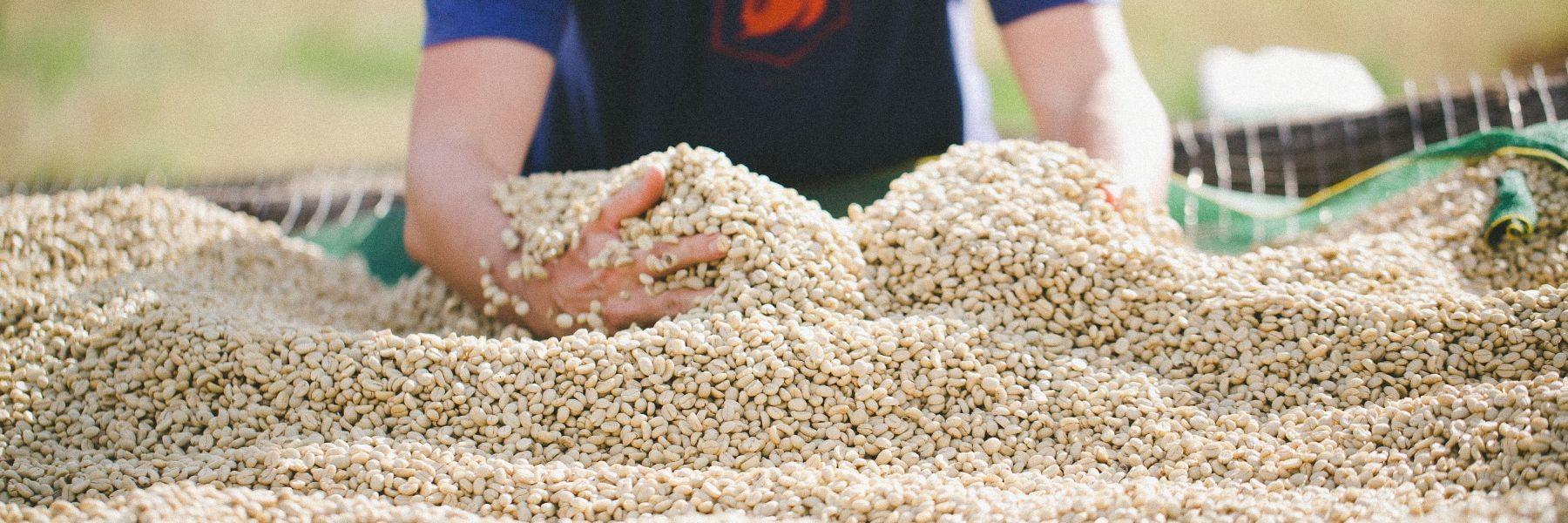 gewaschener Kaffee Burundi