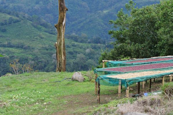 Panama Überblick Kaffee Finca