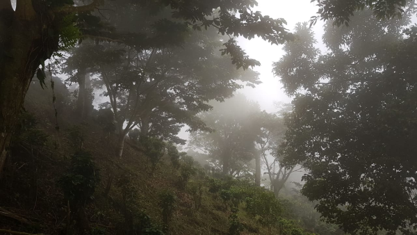 El Salvador Kaffee Farm