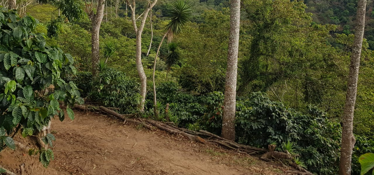 El Salvador Kaffeefarm