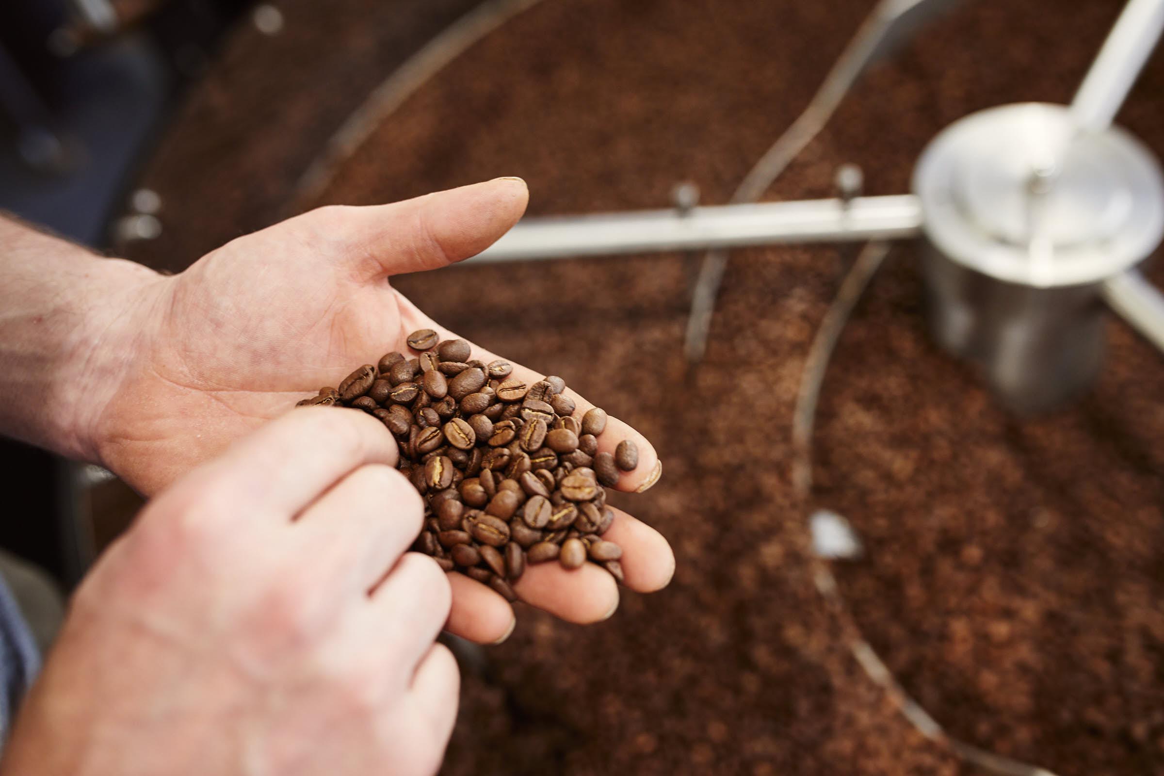Frische Kaffeebohnen in der Hand